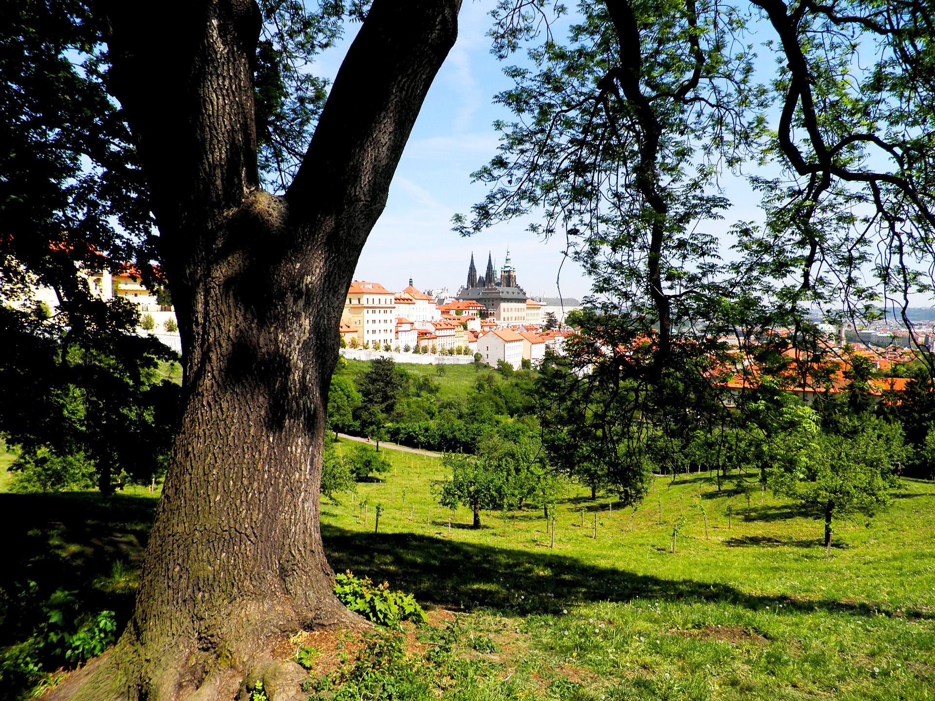 Pražské stromy