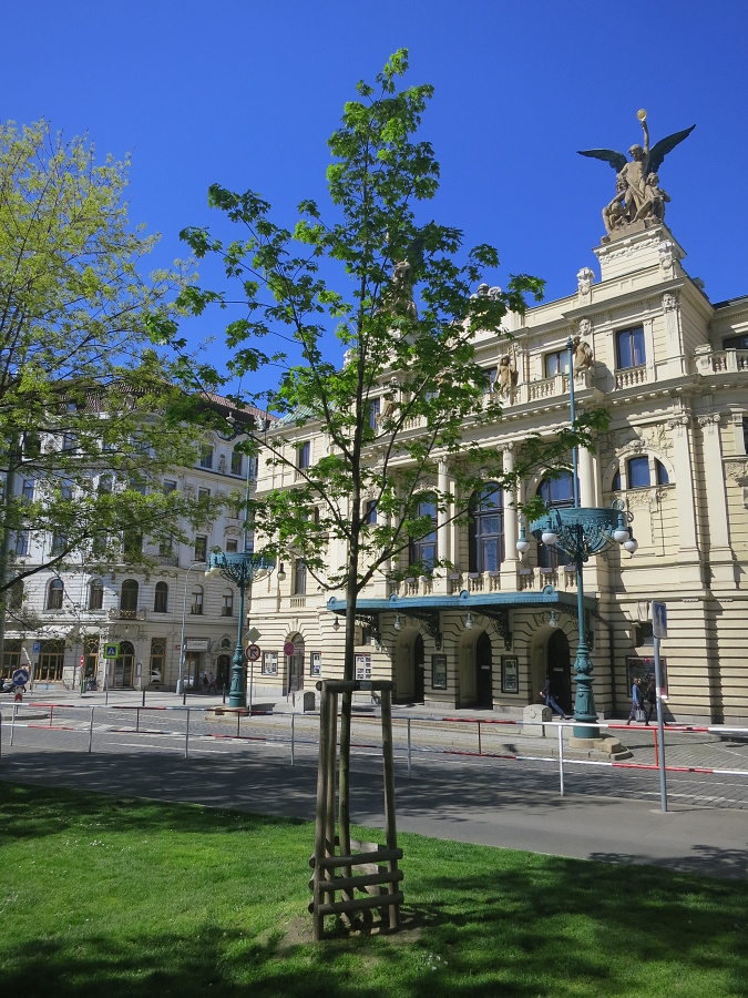 Strom míru na náměstí Míru