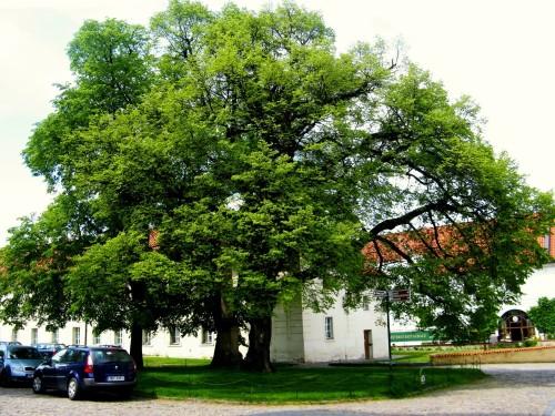 Dvě pamětnice ve Strahovském klášteře od Marcely Lédrové