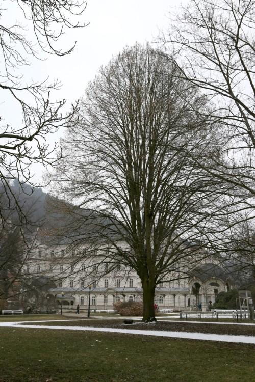 Snímek oceněný 2. místem v kategorii Lípy republiky od Aleny Růžičkové - Lípy republiky v Karlových Varech