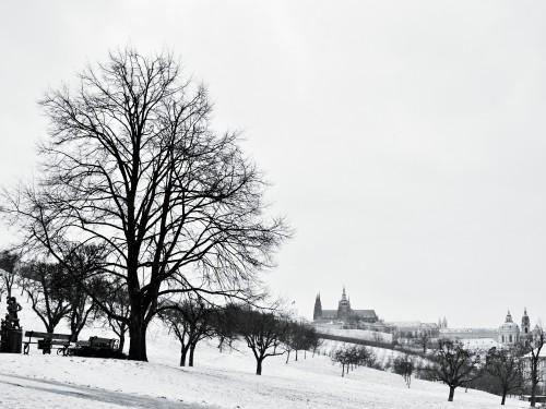 Fotografie ústřední lípy republiky na Petříně od Markéty Zachové