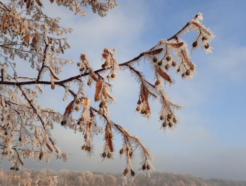 Fotografie Lípa v Led(n)ovém království od Jiřího Hamříka získala 3. oceněné místo (Počernický rybník)
