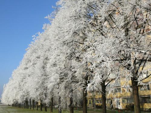 Snímek s názvem Hrdost od Dagmar Frgalové (Jablonecká ul. na Střížkově)