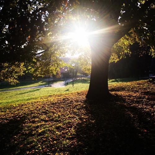 Snímek z názvem Dobré ráno Praho! :-) od Anny Tvrdíkové (Ústřední lípa republiky na Petříně)