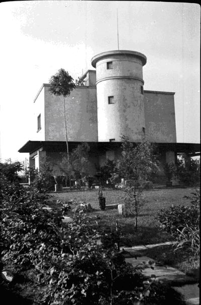 Jasan na fotografii ze 30. let minulého století. Na konci štíhlého kmene je chomáč olistěných větví.
