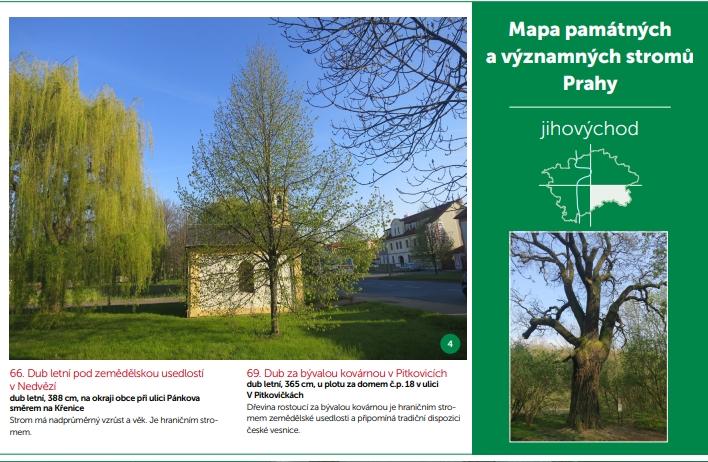 Nová mapa pražských stromů, web slaví 10 let!